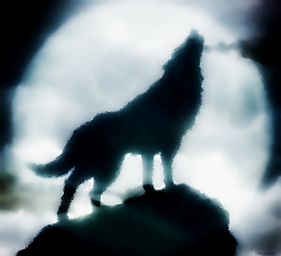 Wolf by TomBebop 550x501 42 Well Painted Wolfs