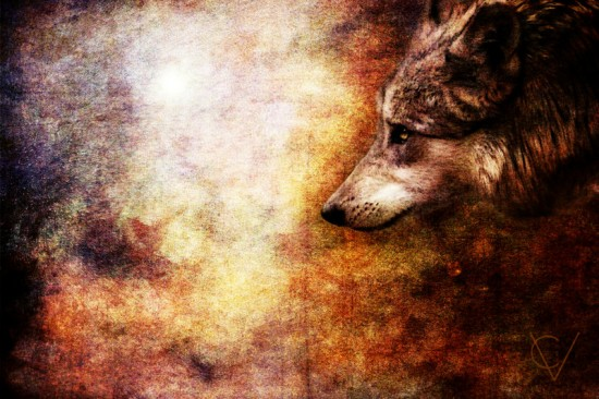 Wolf by crimsonvermillion 550x366 42 Well Painted Wolfs