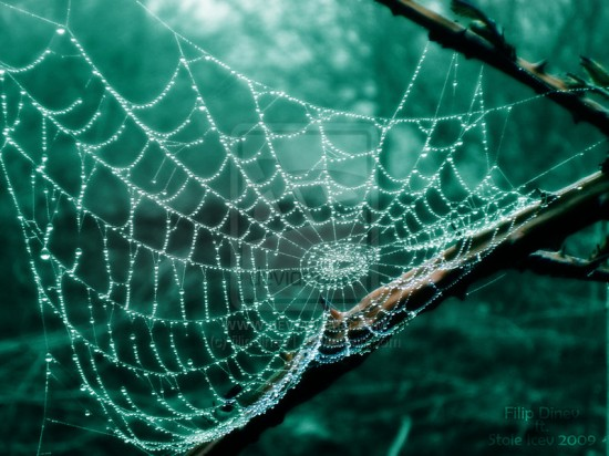 Wood Net by filipdinev1 550x412 31 Amazing Examples Of Spider Net Photography