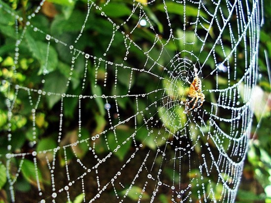 a136bdc8a176f8448b6131c493851795 550x412 31 Amazing Examples Of Spider Net Photography