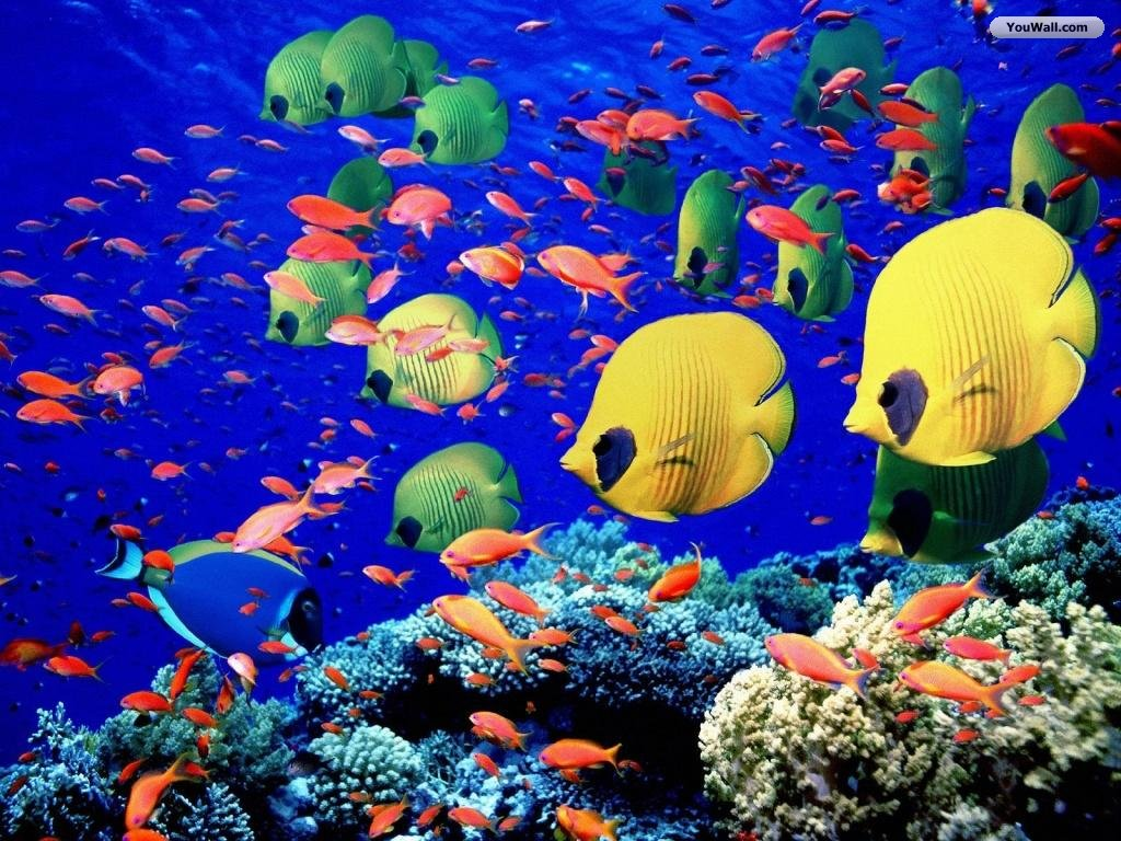 df24c35cd7 550x412 42 Under The Sea Wallpapers
