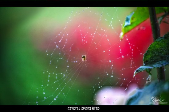 fbe7bc17b55c6eb0ec08c8e415a377f0 550x366 31 Amazing Examples Of Spider Net Photography