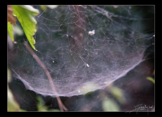 net curve by ErcronHartingtonn 550x396 31 Amazing Examples Of Spider Net Photography