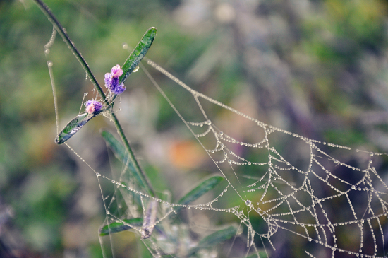 spider__s_beautiful_net_II_by_killinfinity