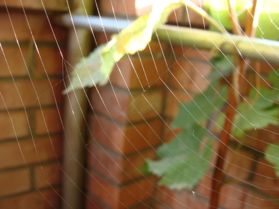 spider  s home by SaCOTY 550x412 31 Amazing Examples Of Spider Net Photography