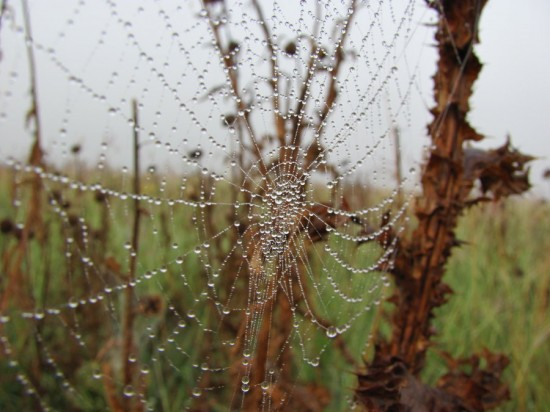 spider  s net by mmddyy 550x412 31 Amazing Examples Of Spider Net Photography