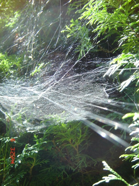 spider net  by moonspell149 487x650 31 Amazing Examples Of Spider Net Photography
