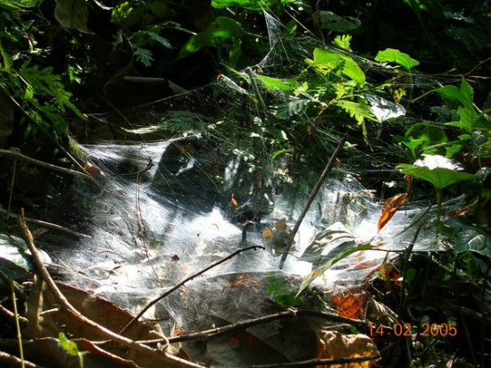 spider net by efifry 550x412 31 Amazing Examples Of Spider Net Photography