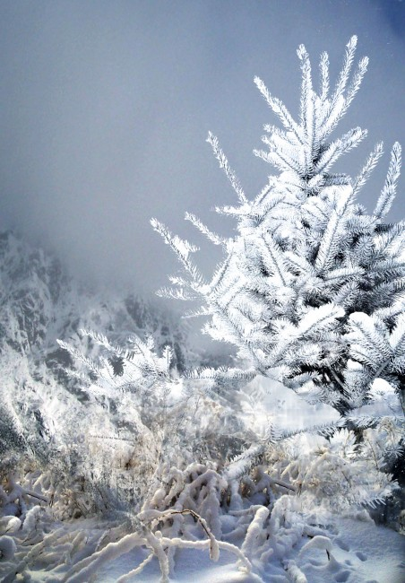 this_winter_____by_lovelycristina