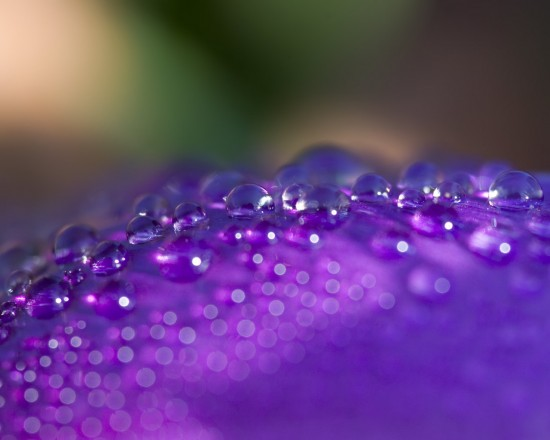 water-droplets-petal