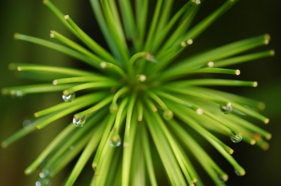 water_droplets