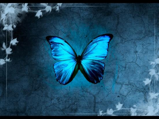 Blue_Butterfly_by_modern_myth
