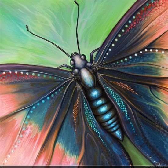 Butterfly_011_by_inventivedreams