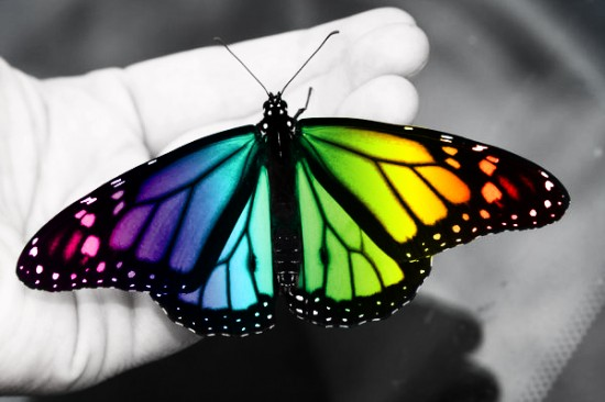 Colorful_Butterfly_by_Zayix
