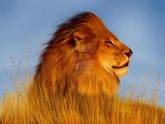 Lion Digital Painting 550x412 15 Really Cool Digital Painting Examples