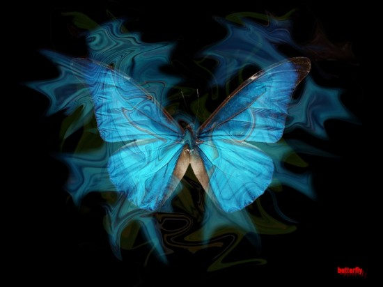 butterfly_blue__by_klimo