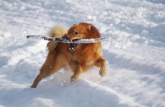 07 trick dog 20 Stunning Action Photos of Animals