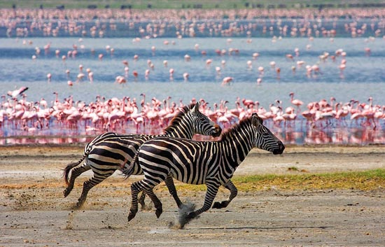 20 racing stripes by lightkast d41hui6 20 Stunning Action Photos of Animals