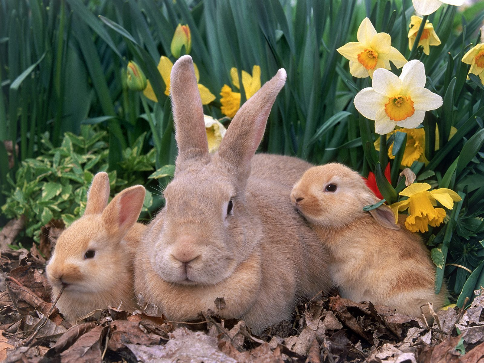Beautiful easter wallpapers - Easter bunny wallpaper ...